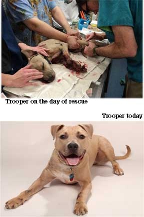 Trooper before and after