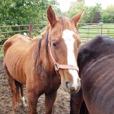 Emaciated horses rescued by Longmeadow Rescue Ranch