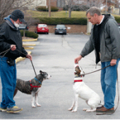 volunteer dog walkers help animals and support HSMO
