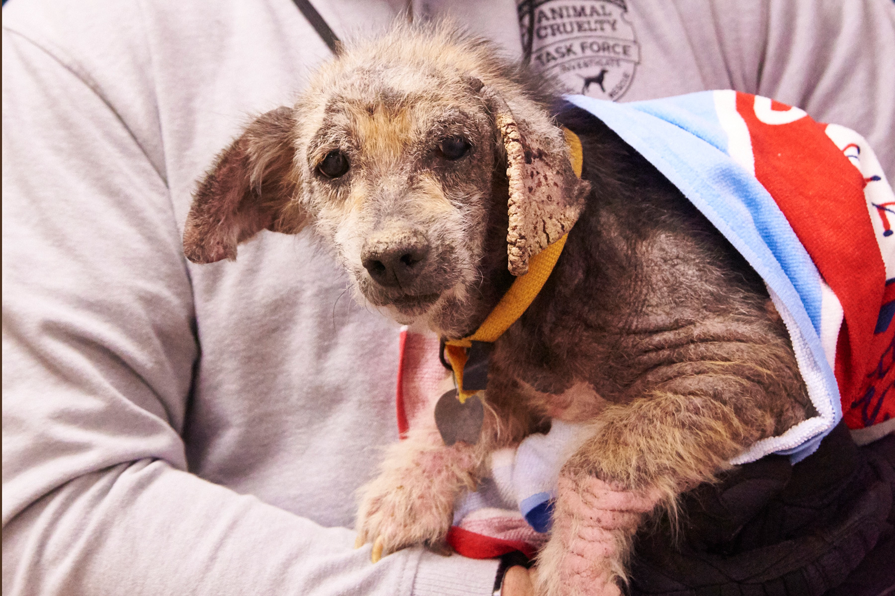 Nicky dog rescued from Newton County