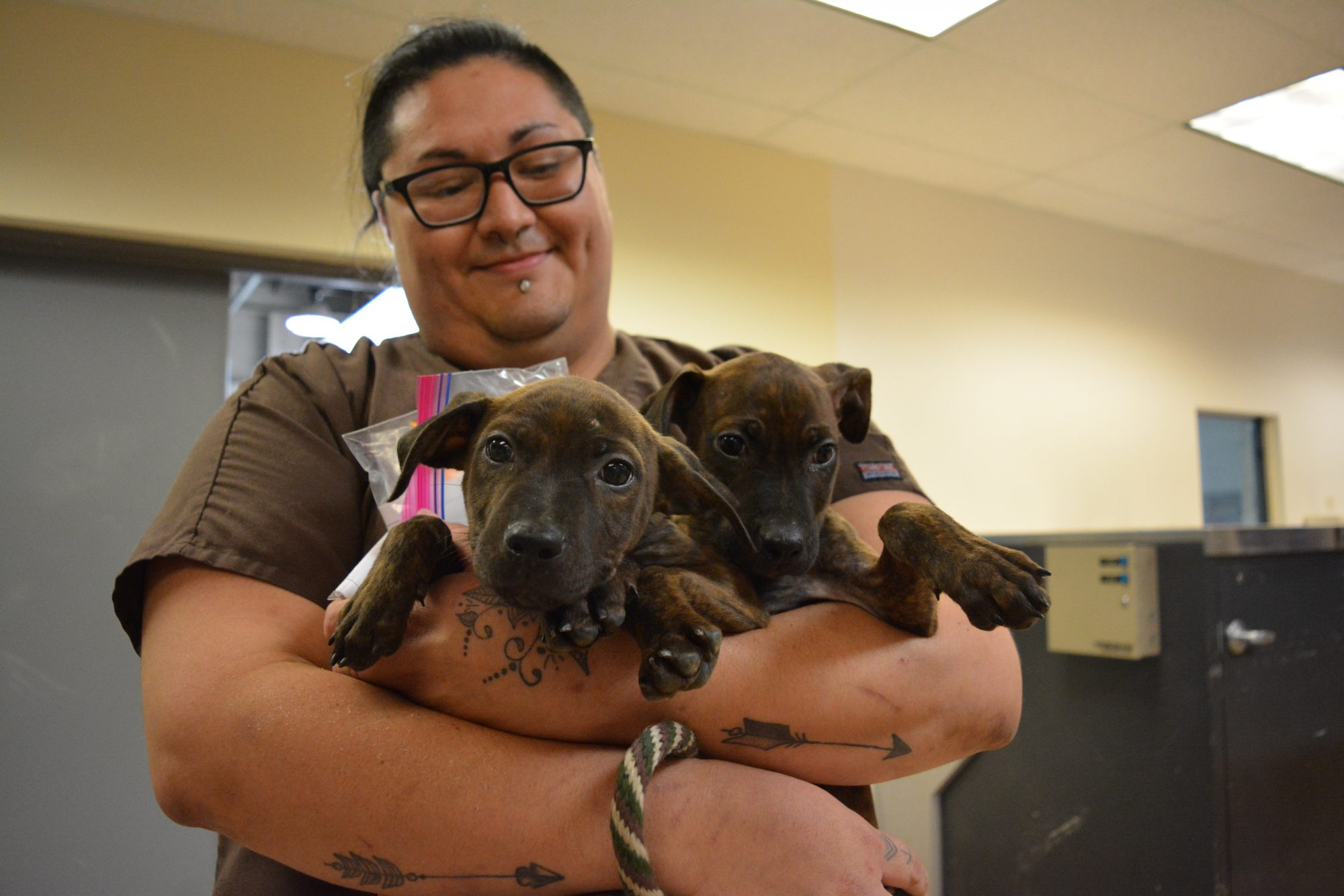 Puppies from Houston arrive at HSMO