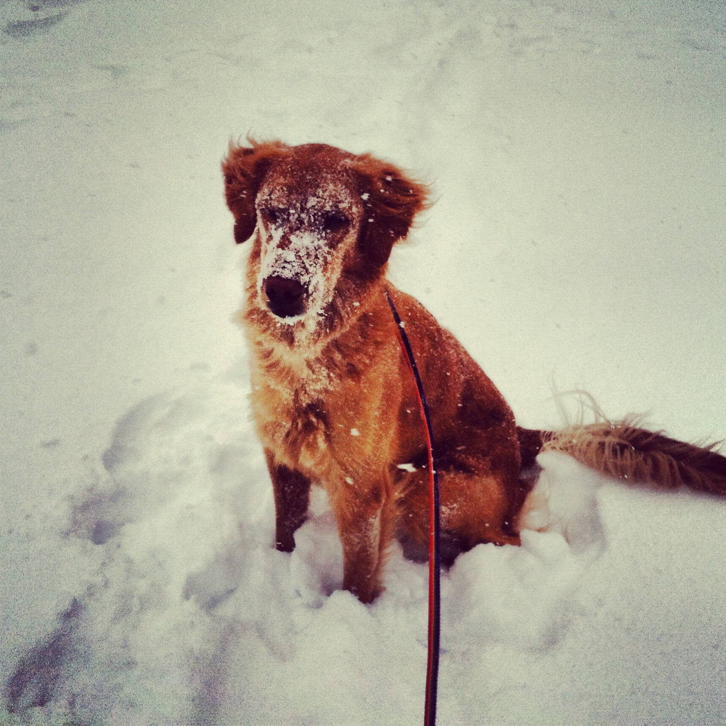 HSMO encourages pet owners to bring them inside when its under 35
