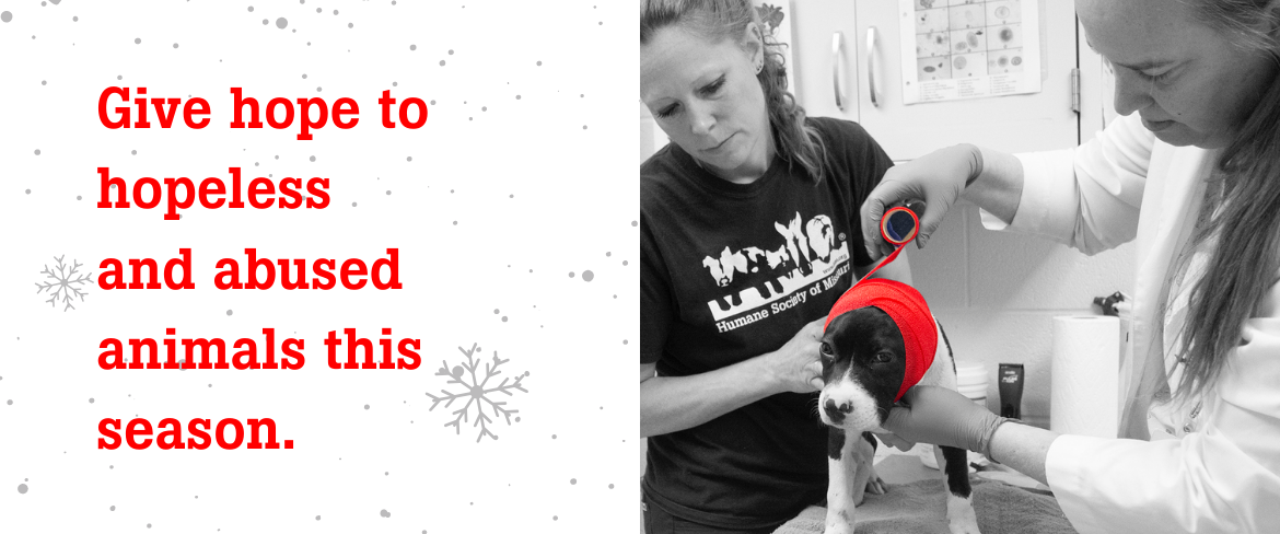 give hope to animals this season