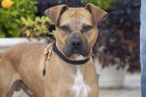 Tanner-A678355