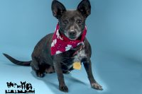Maggie-A683932