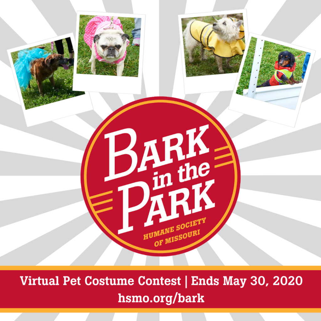 enter the virtual Bark in the Park Pet Costume Contest
