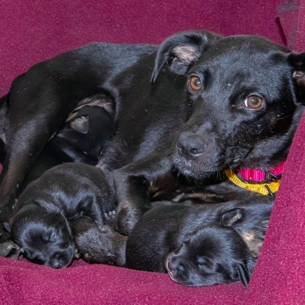 Hsmo Rescues Mother And Puppies From Abandoned Property Humane Society Of Missouri