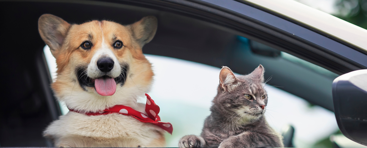 cat and dog in car window
